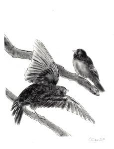 drawing_birds_attack